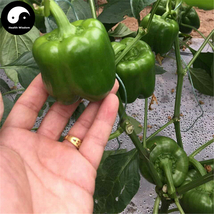 Buy Green Sweet Pepper Seeds 100pcs Plant Bell Pepper Vegetables Capsicum - $5.99