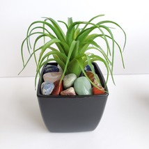 Faux Air Plant with Natural Polished Stones in Planter, Tumbled Rocks, A... - $14.99