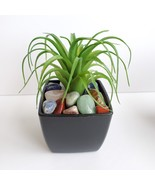 Faux Air Plant with Natural Polished Stones in Planter, Tumbled Rocks, A... - £10.86 GBP