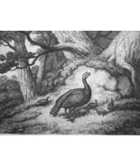 AESOP FABLES Animals Turkey & Ants - 1811 Original Etching Print - $22.49