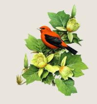 Scarlet Tanager Bird Cross Stitch Pattern***L@@K*** - $4.95