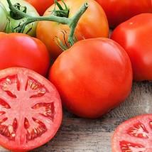 Marglobe Tomato Seeds 125 seeds NON-GMO - $3.95
