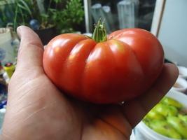 Seeds Of Life Heirloom Tomato Variety Pack Survival Seeds 12 Varieties - $9.99