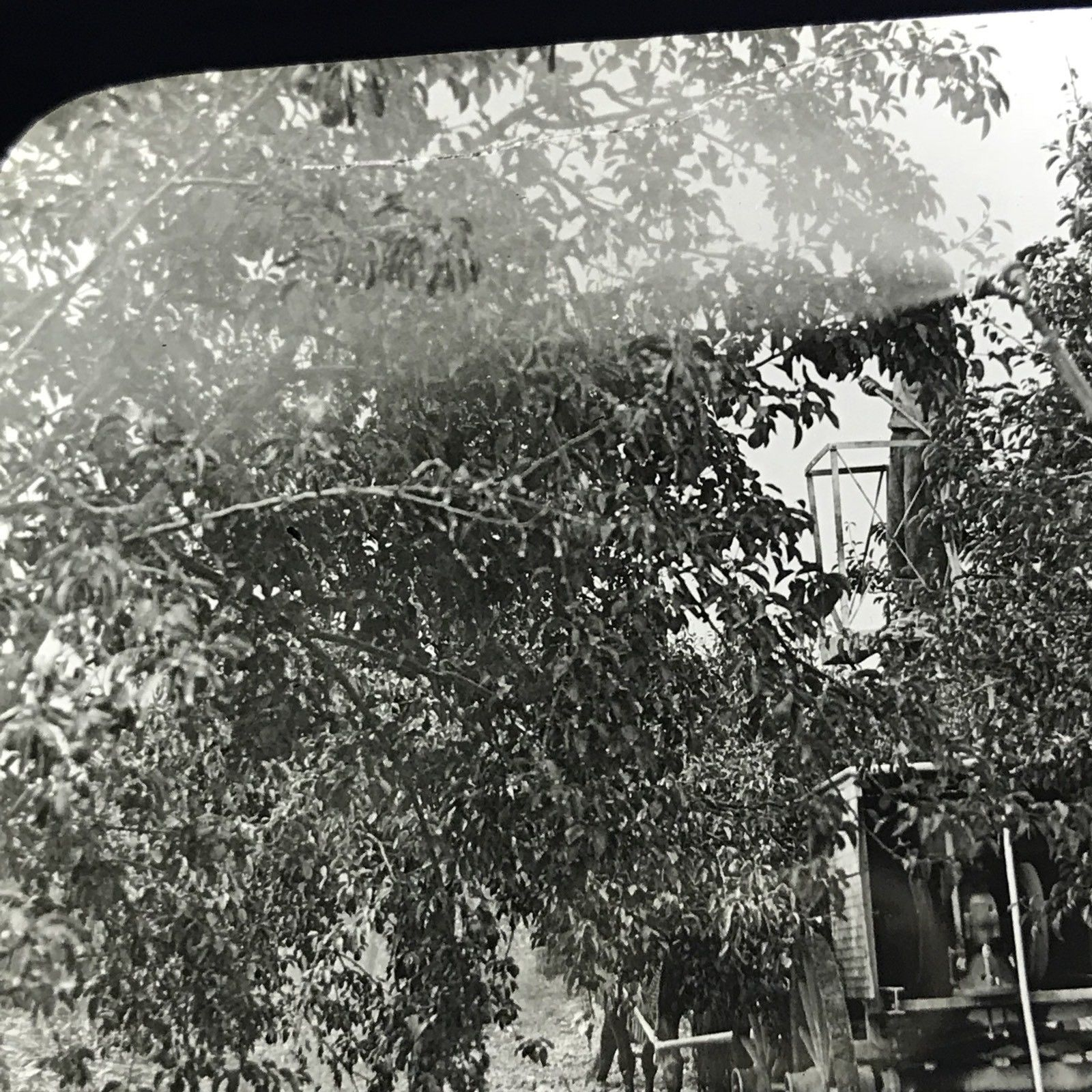 Vtg Keystone Magic Lantern Slide Photo Spraying Apple Orchard Hilton NY