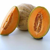SHIP FROM US TUSCANY MELON- 8 OZ BULK ~7,840 SEEDS -HEIRLOOM, NON-GMO, TM11 - $132.96
