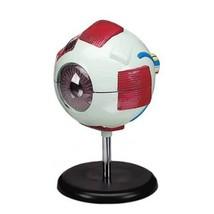 Budget Whopper Eye Model - $40.46