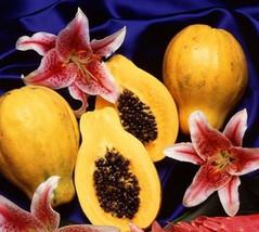 5 Dwarf Papaya Seeds-1059 - $2.98