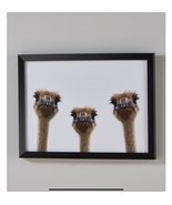 "Ostriches Picture Black Frame White Background 11"" x 15"" Matte - $29.99"