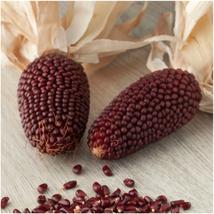 STRAWBERRY CORN Red Sweet Popcorn Zea Mays Heirloom NON-GMO 20 SEEDS - $12.49