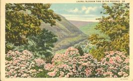 Laurel Blossom time in the Poconos 1939 used linen Postcard  - $4.99