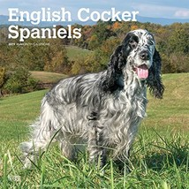 English Cocker Spaniels 2019 12 x 12 Inch Monthly Square Wall Calendar, ... - $18.09