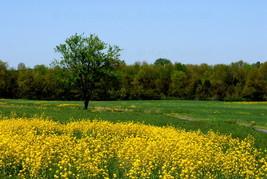Landscape at Gettysburg,Va. 8x12 Photograph - $99.00