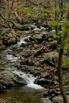 Stream In The Woods at Shenandoah National Park, Va, 8x12 Photograph - $99.00