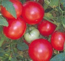 2000 Seeds of Arkansas Traveler - Tomatoes Late Season - $59.40
