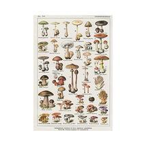 "Vintage French Mushroom Identification Chart - Art Print - 19"" tall x 13"" wide - $20.00"