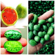 10Pcs Thumb Watermelon Plant Fruit Flores Seed Mini Watermelon Easy Growing - $9.24