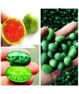 10Pcs Thumb Watermelon Plant Fruit Flores Seed Mini Watermelon Easy Growing - $9.24