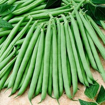 20 French Bean Seeds - $4.99