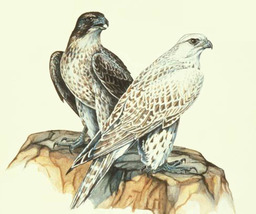 Gyr Falcons Pair Cross Stitch Pattern***L@@K*** - $4.95
