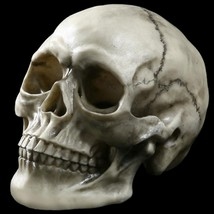 Skull Head Ornaments Cracked Mongolian Head  Realistic Life-Size Models ... - $33.65
