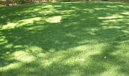 10lb Seeds ProTurf Grass Easy to Grow #IMA14 - $102.99