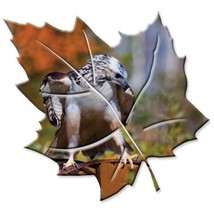 Jim Backus Photographic Redtail Hawk Bird Metal Wall Art Maple Leaf Red ... - $98.95