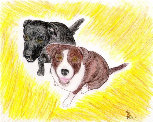 Order 4 starshinin colored pencil drawing of pups