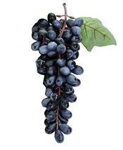 PANDA SUPERSTORE Plastic Beautiful Simulation Model of Black Grapes/Play Toy/Kit