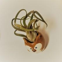 "Kangaroo Pot with Curly Air Plant, Ceramic Animal Planter 2"", Live Tillandsia image 5"