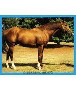 Secretariat 1973 Triple Crown Champion Race Horse Postcard - $20.00