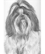 Shih Tzu Dog - Mike Sibley Portrait Matted Art Card - 5 in x 7 in Design... - $6.99