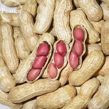 BEST PRICE 5 Seeds Heirloom Carwile's Virginia Peanut,DIY Fruit Seeds E3... - $4.99