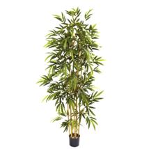 6' Bamboo Tree  - $115.62