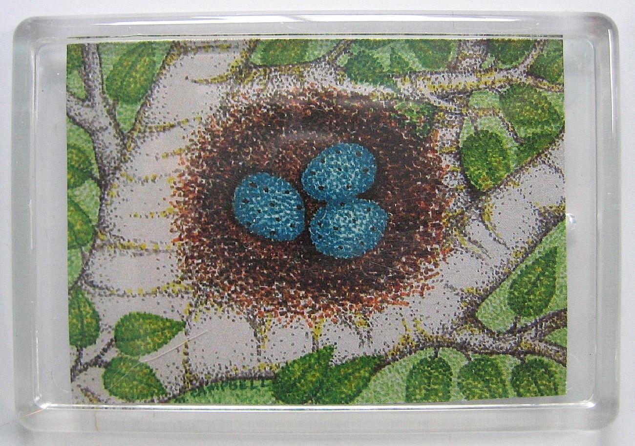 Robins egg nest in white birch branches magnet
