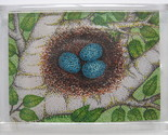 Robins egg nest in white birch branches magnet thumb155 crop