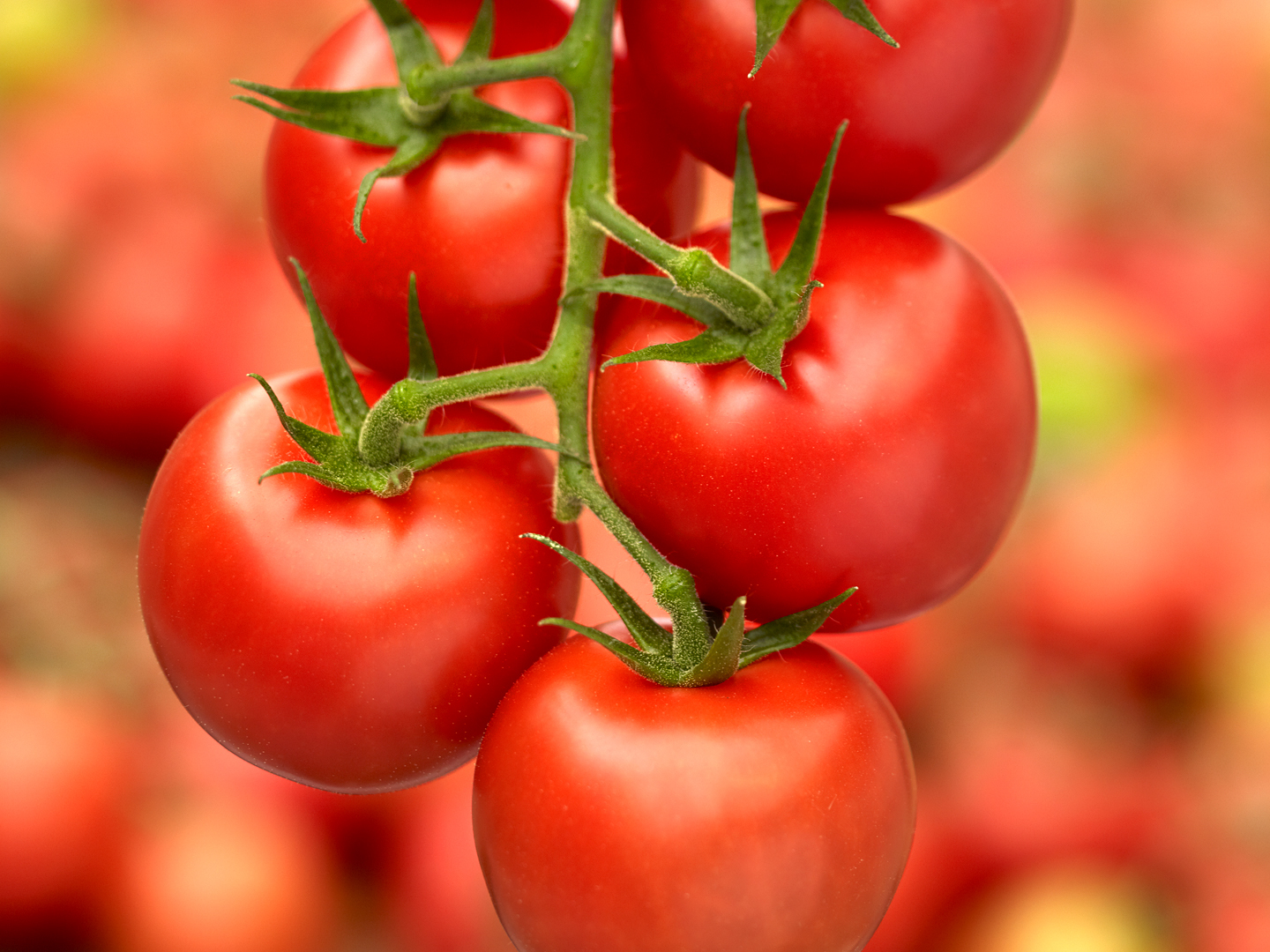 Primary image for 25 Fresh Seeds - Tomato Campari - Sweet & Yummy - Hand Picked Organically