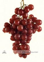 100 pcs Red Bell Grape Very Sweet Hardy Plant Seedlings - $9.81
