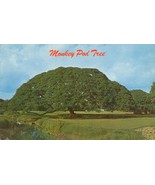 Hawaiian Monkey Pod Tree, Hawaii unused Postcard  - $3.99
