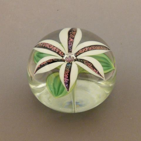 Orientandflume paperweight dichroic lily white