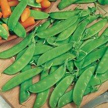 50 Seeds of Oregon Sugar Pod Pea / Pisum sativum - $13.85