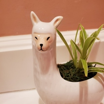 Llama Planter with live Spider Plant, ceramic animal planter pot, houseplant image 5
