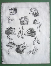 PERSIA Wild Animals of Persians Heads & Paws - 1774 Print Copperplate En... - $9.45