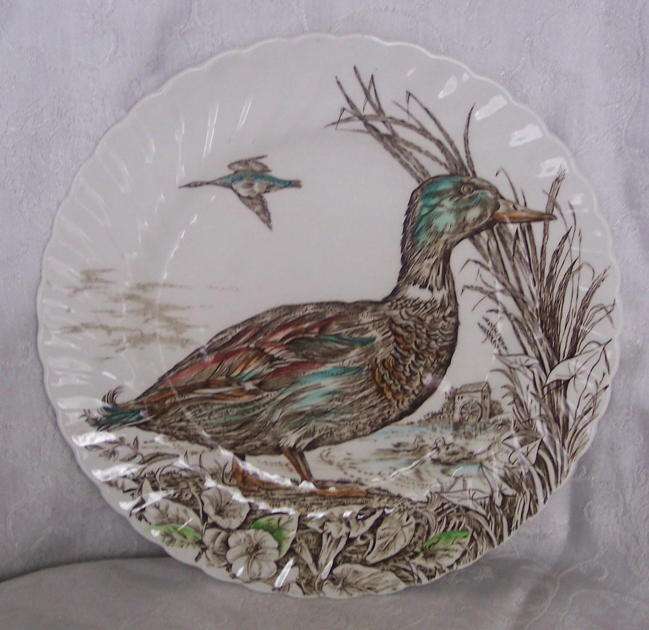 British_anchor_wild_birds_of_heath_moorland_mallard_whole