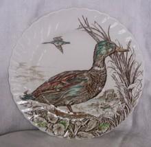 British_anchor_wild_birds_of_heath_moorland_mallard_whole_thumb200