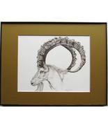Wild Goat, Ibex, Framed Wildlife Art Print,Pen and Ink, Animal Art Print... - $39.00