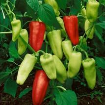 Pepperoncini italian sweet pepper thumb200