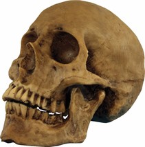 HALLOWEEN  SKULL RESIN CRANIUM SKULL CEMETARY  HAUNTED HOUSE  PROP DECOR... - $19.90