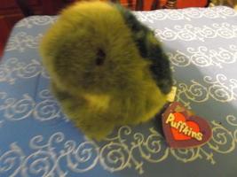 "Turtle Puffkins Turtle Plush ""Shelly"" born 2-12-97 - $12.00"