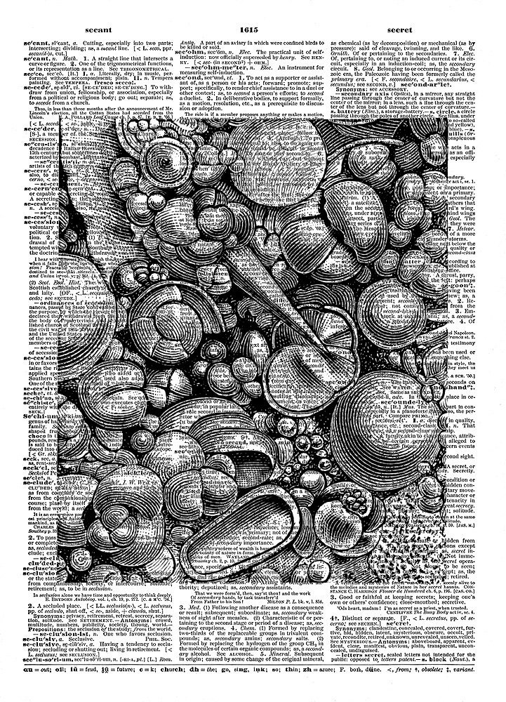 SEASHELLS Sea Ocean Animals Vintage Dictionary Page Art Print No. 0157