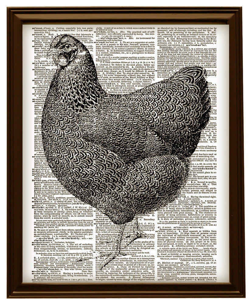 Lovely CHICKEN Farm Animal Vintage Dictionary Page Art Print No. 0030